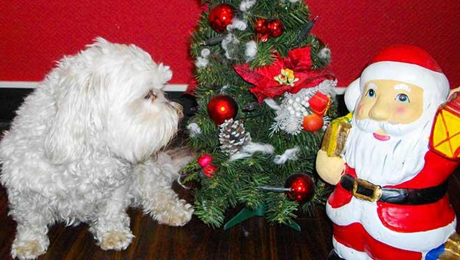 Weihnachten im Friseursalon